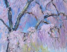 Blossoming Cherry, Kensington