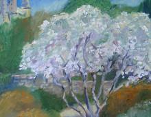 Magnolia at National Cathedral