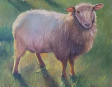 Sheep Shadows